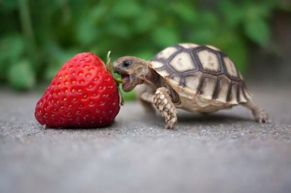 cute-animals-eating-berries-become-cute-monsters-7